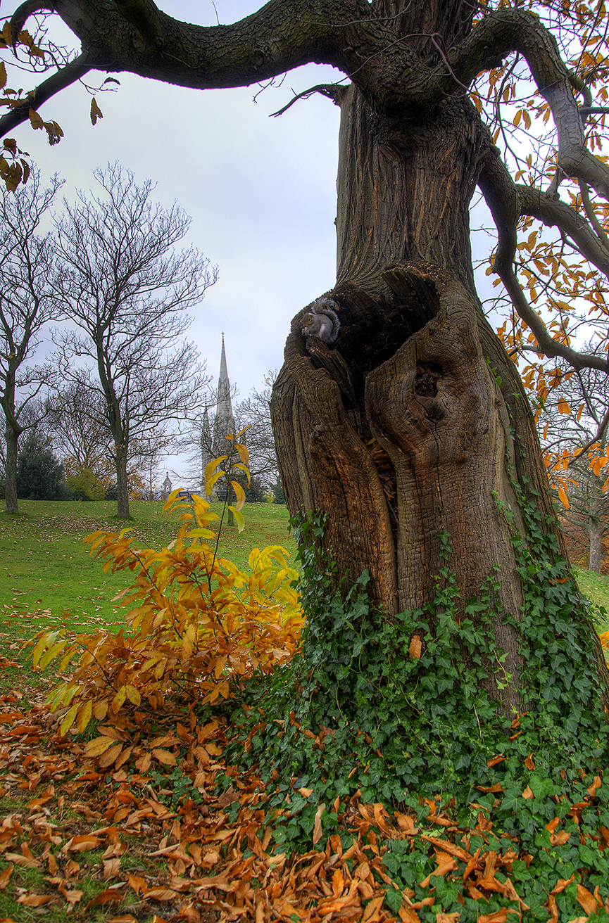 Oak tree, squirrel and church