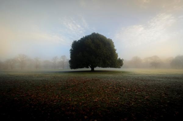 fog-4