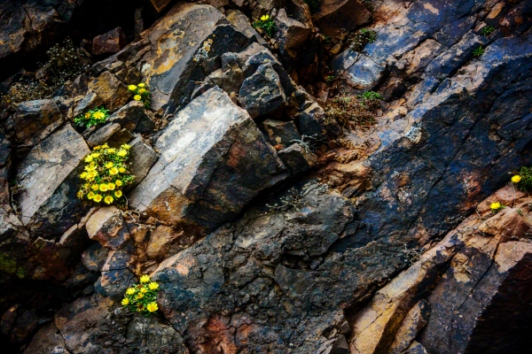 rock and flowers
