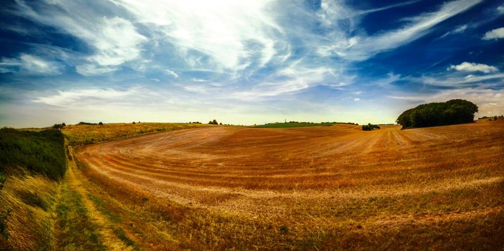 StMargaretswheat